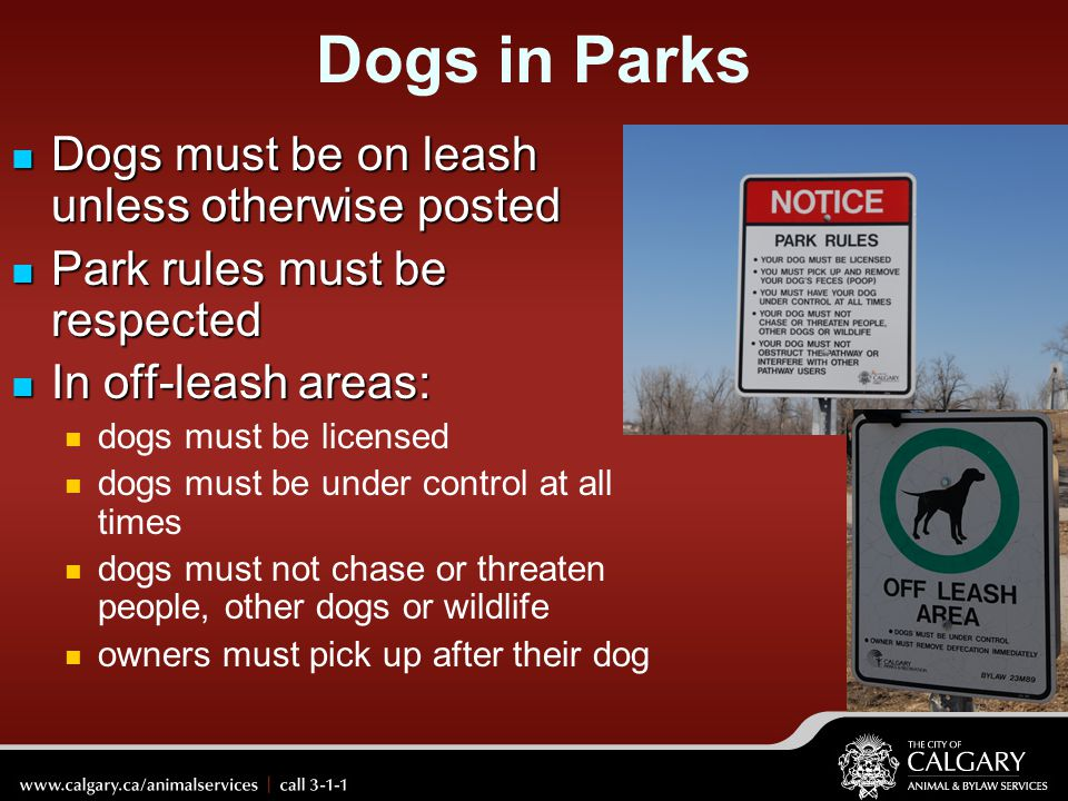 Dogs in Parks Dogs must be on leash unless otherwise posted