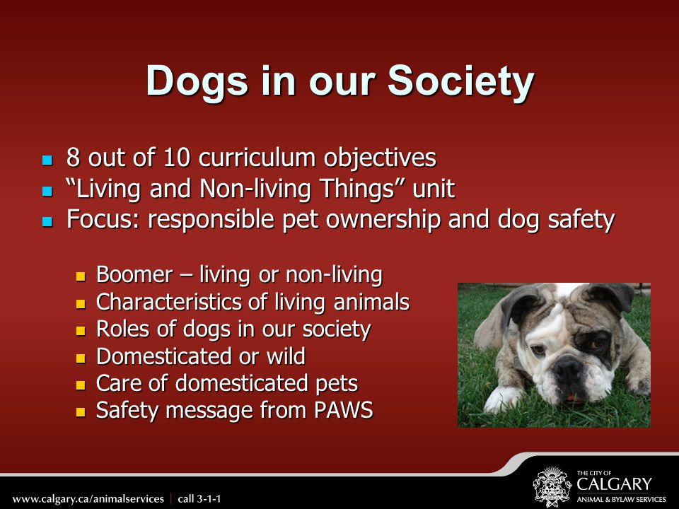Dogs in our Society 8 out of 10 curriculum objectives