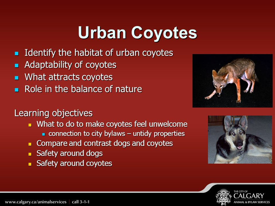 Urban Coyotes Identify the habitat of urban coyotes