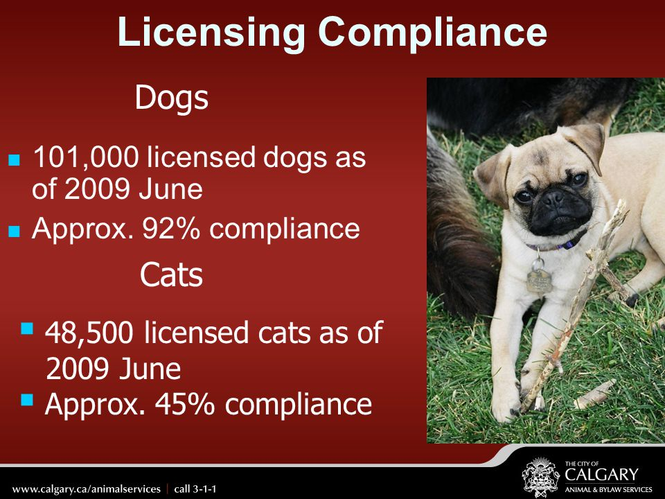 Licensing Compliance Dogs Cats 101,000 licensed dogs as of 2009 June