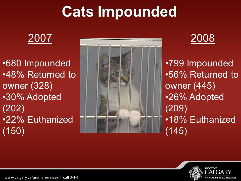 Cats Impounded 2007 2008 680 Impounded 48% Returned to owner (328)