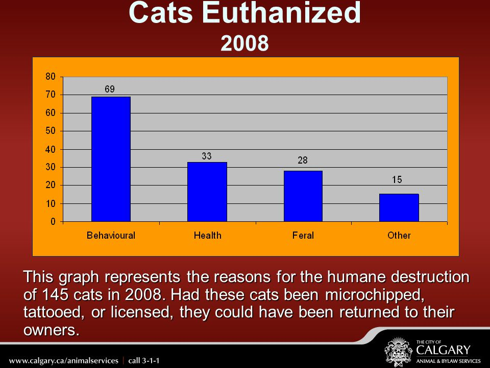 Cats Euthanized 2008