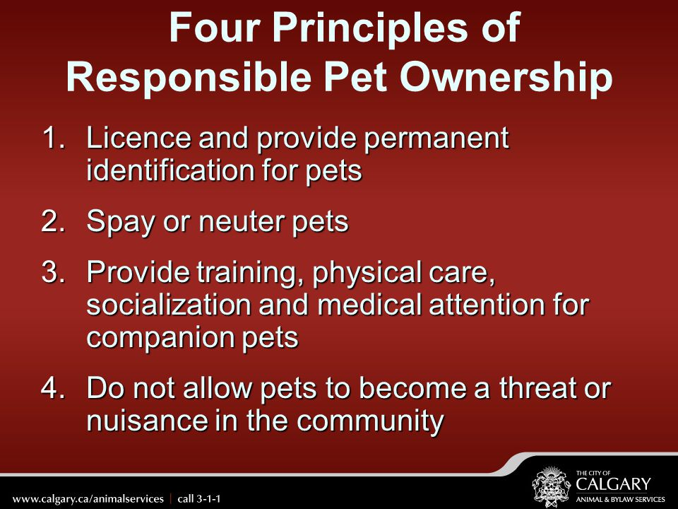 Four Principles of Responsible Pet Ownership