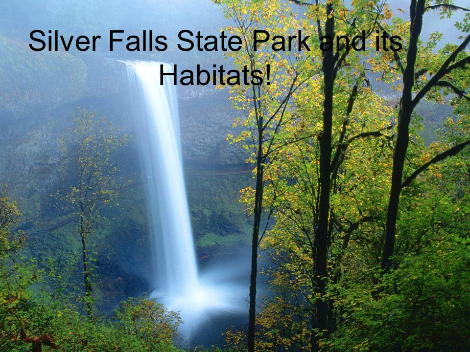 Silver Falls State Park and its Habitats!