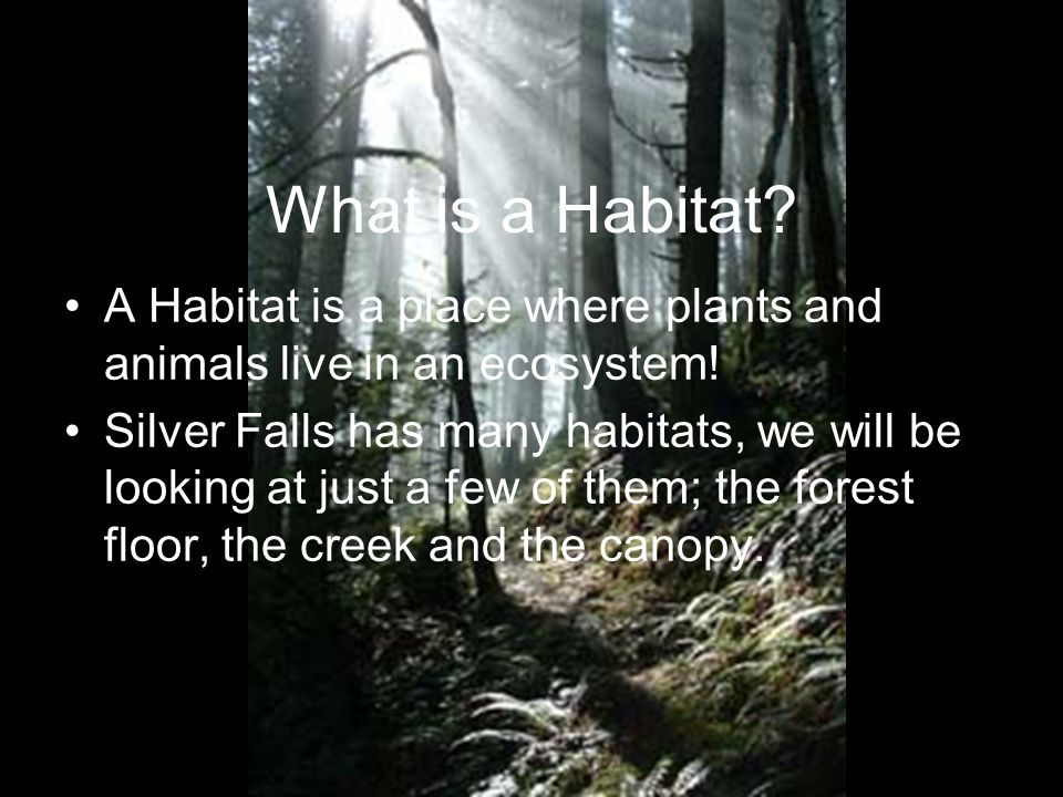 What is a Habitat A Habitat is a place where plants and animals live in an ecosystem!