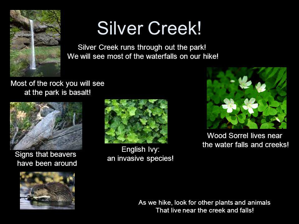 Silver Creek! Silver Creek runs through out the park!