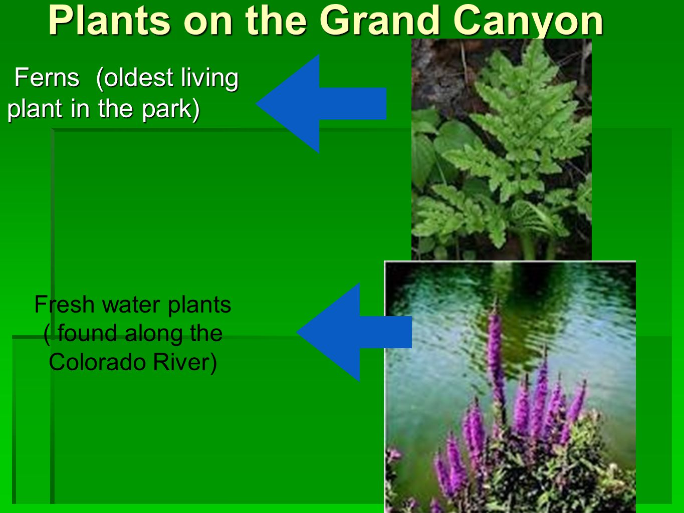 Plants on the Grand Canyon