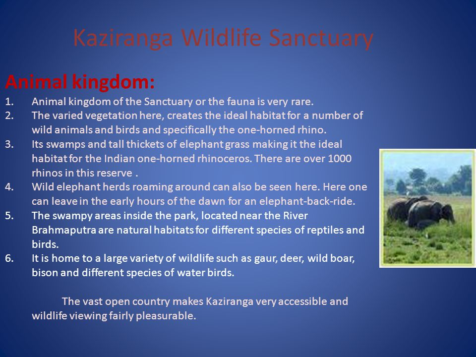 Kaziranga Wildlife Sanctuary