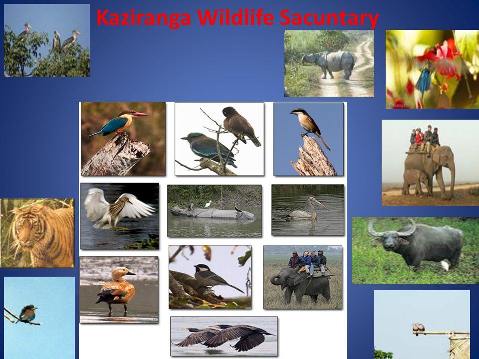 Kaziranga Wildlife Sacuntary