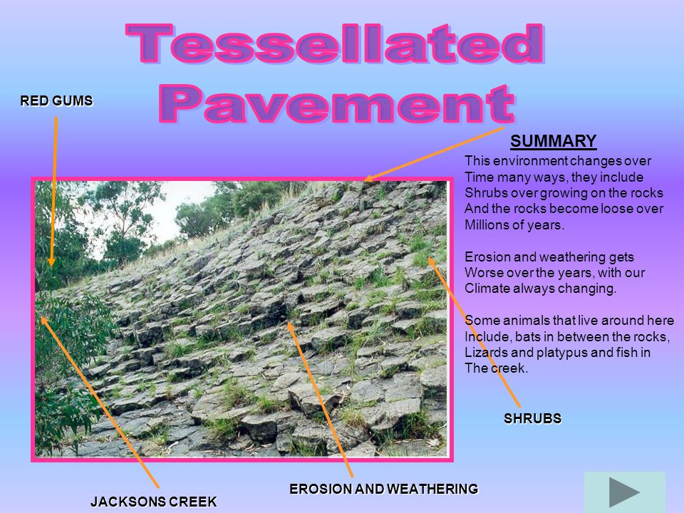 Tessellated Pavement SUMMARY RED GUMS This environment changes over