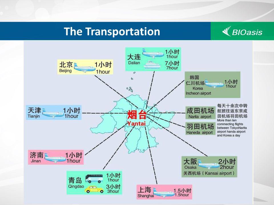 The Transportation