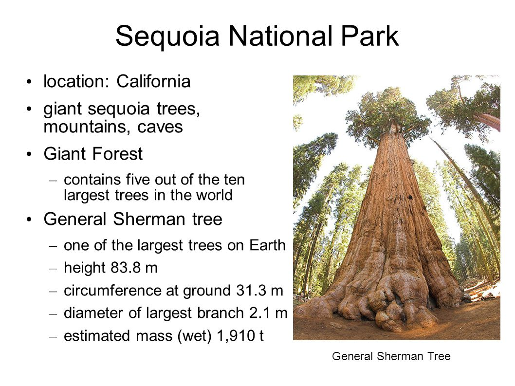 Sequoia National Park location: California