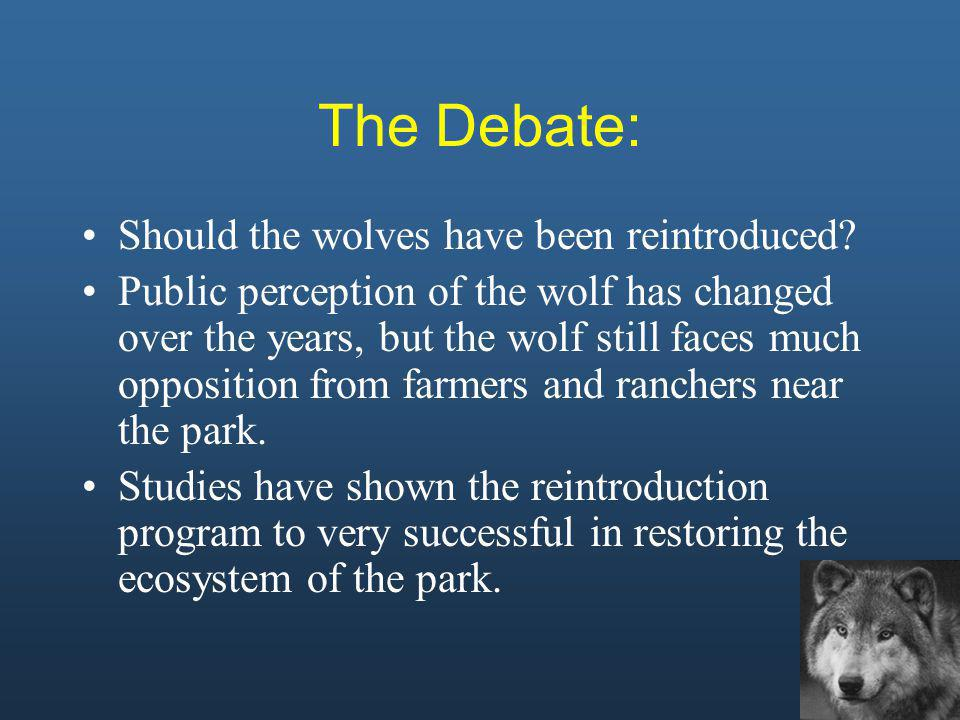 The Debate: Should the wolves have been reintroduced