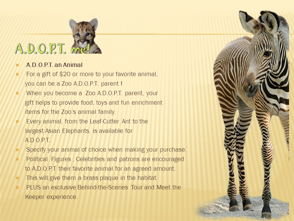 A.D.O.P.T. an Animal For a gift of $20 or more to your favorite animal, you can be a Zoo A.D.O.P.T. parent !