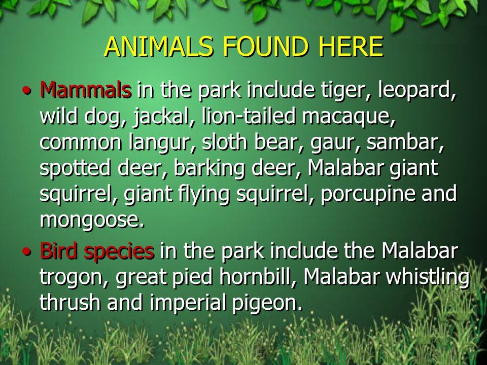 ANIMALS FOUND HERE