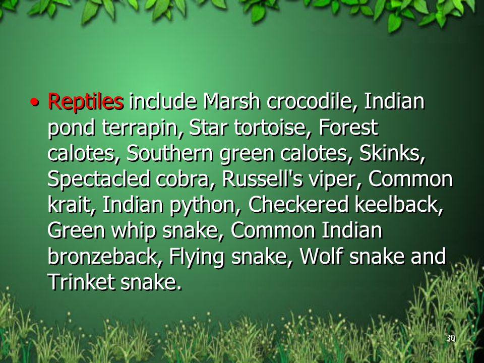 Reptiles include Marsh crocodile, Indian pond terrapin, Star tortoise, Forest calotes, Southern green calotes, Skinks, Spectacled cobra, Russell s viper, Common krait, Indian python, Checkered keelback, Green whip snake, Common Indian bronzeback, Flying snake, Wolf snake and Trinket snake.