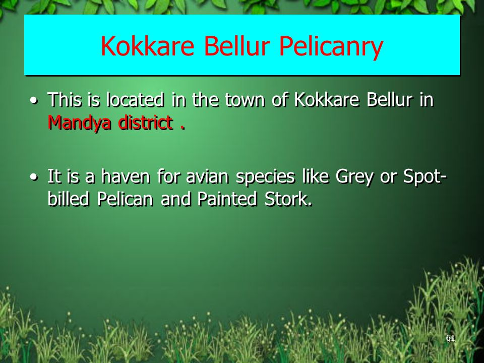 Kokkare Bellur Pelicanry