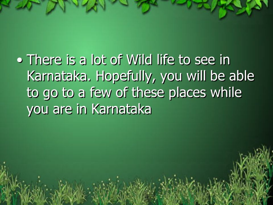 There is a lot of Wild life to see in Karnataka