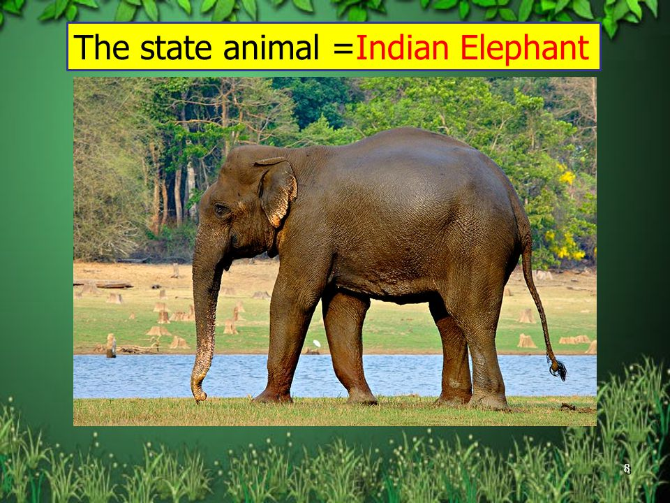 The state animal =Indian Elephant