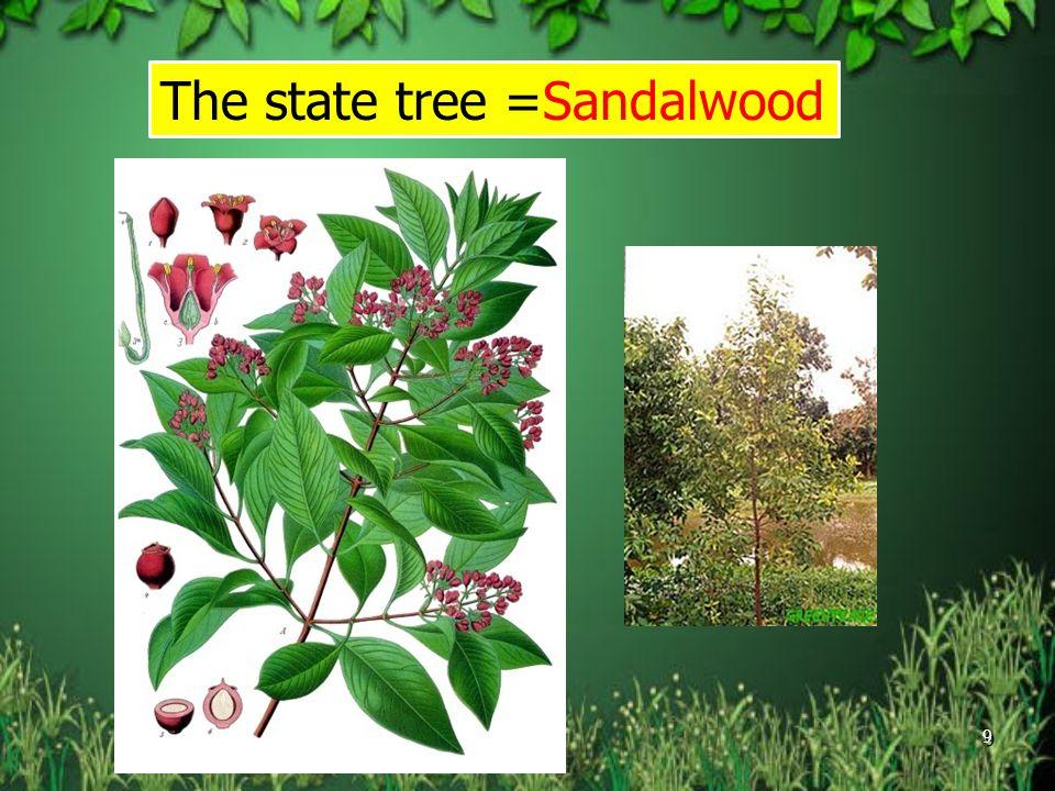 The state tree =Sandalwood