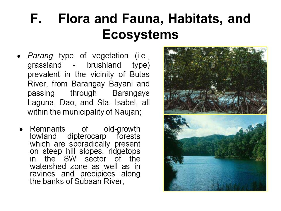 F. Flora and Fauna, Habitats, and Ecosystems