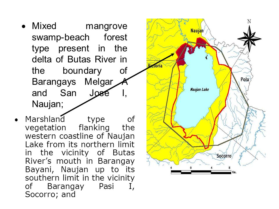 Mixed mangrove swamp-beach forest type present in the delta of Butas River in the boundary of Barangays Melgar A and San Jose I, Naujan;