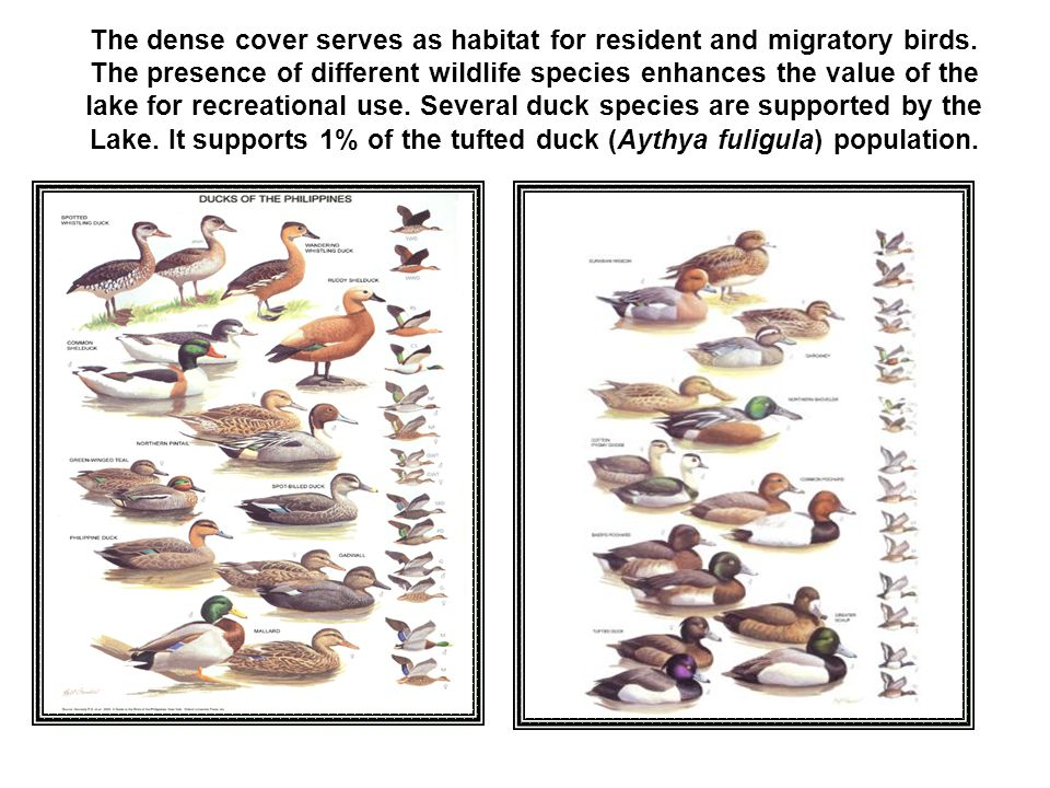 The dense cover serves as habitat for resident and migratory birds