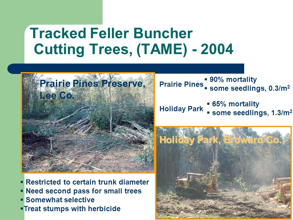 Tracked Feller Buncher Cutting Trees, (TAME) - 2004