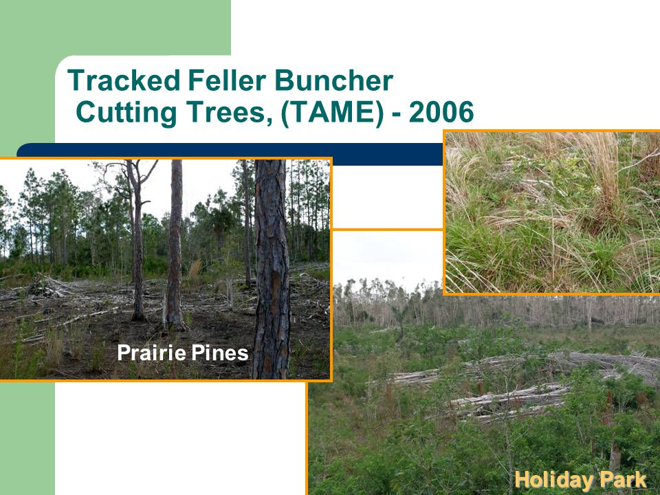 Tracked Feller Buncher Cutting Trees, (TAME) - 2006