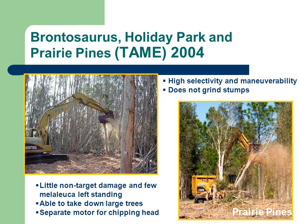 Brontosaurus, Holiday Park and Prairie Pines (TAME) 2004