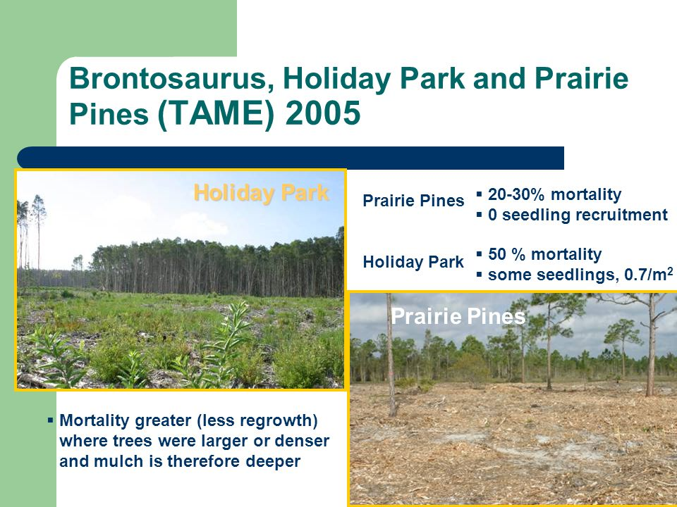 Brontosaurus, Holiday Park and Prairie Pines (TAME) 2005