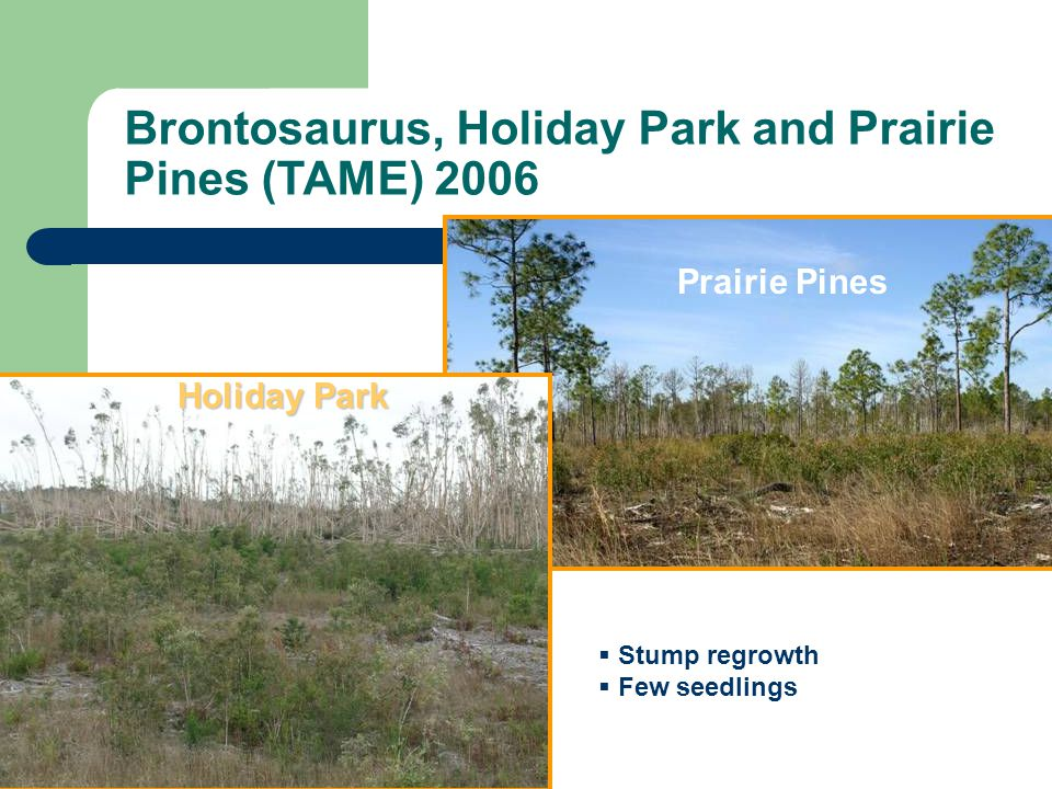 Brontosaurus, Holiday Park and Prairie Pines (TAME) 2006