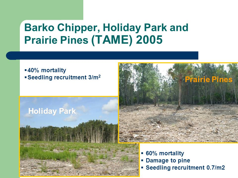 Barko Chipper, Holiday Park and Prairie Pines (TAME) 2005