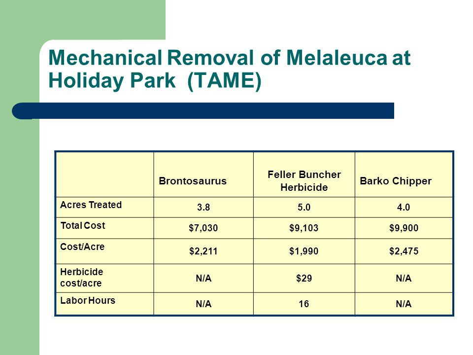Mechanical Removal of Melaleuca at Holiday Park (TAME)