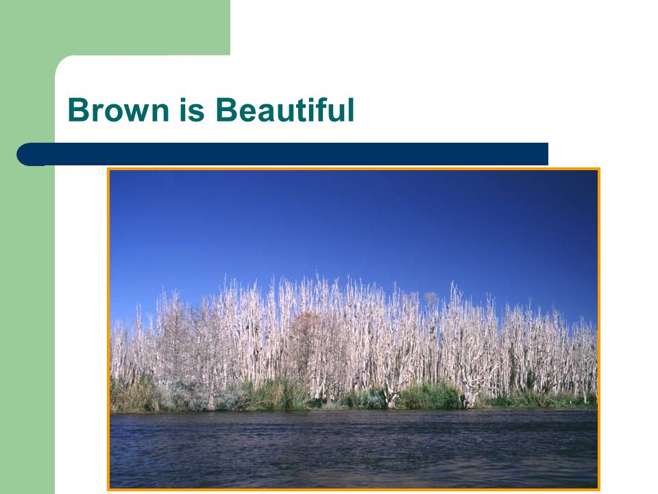 Brown is Beautiful