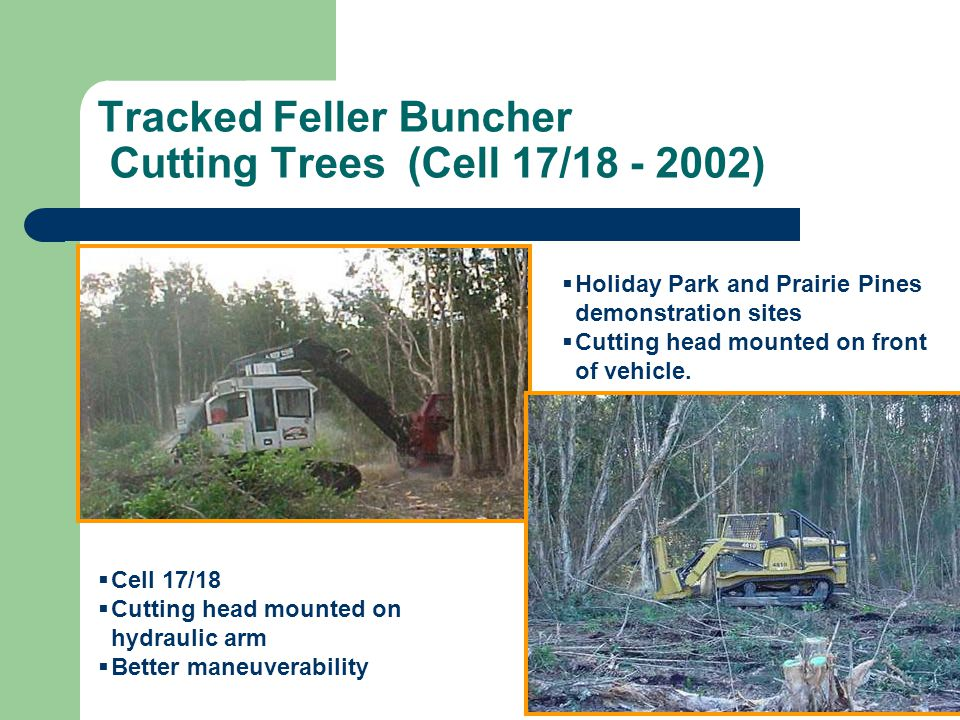 Tracked Feller Buncher Cutting Trees (Cell 17/18 - 2002)