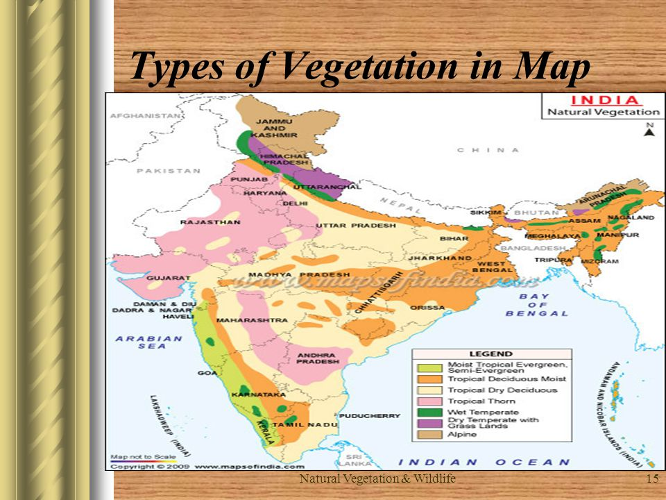 Types of Vegetation in Map