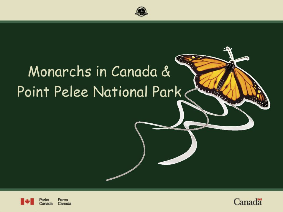 Monarchs in Canada & Point Pelee National Park