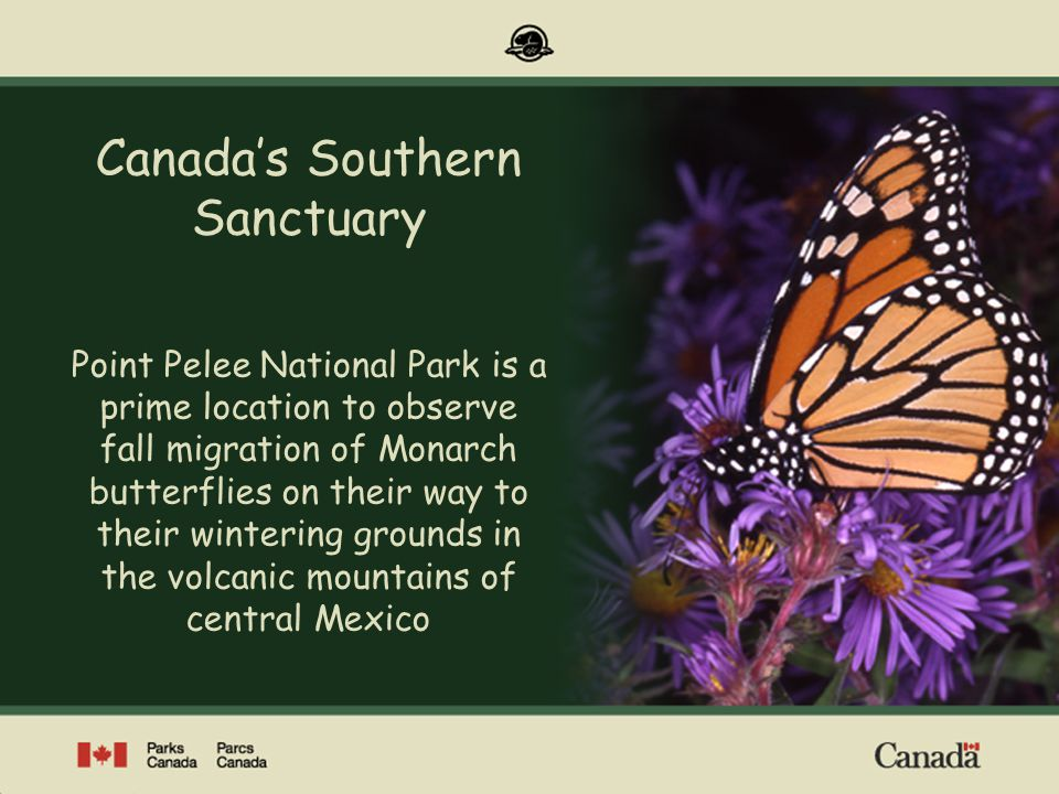 Point Pelee National Park of Canada