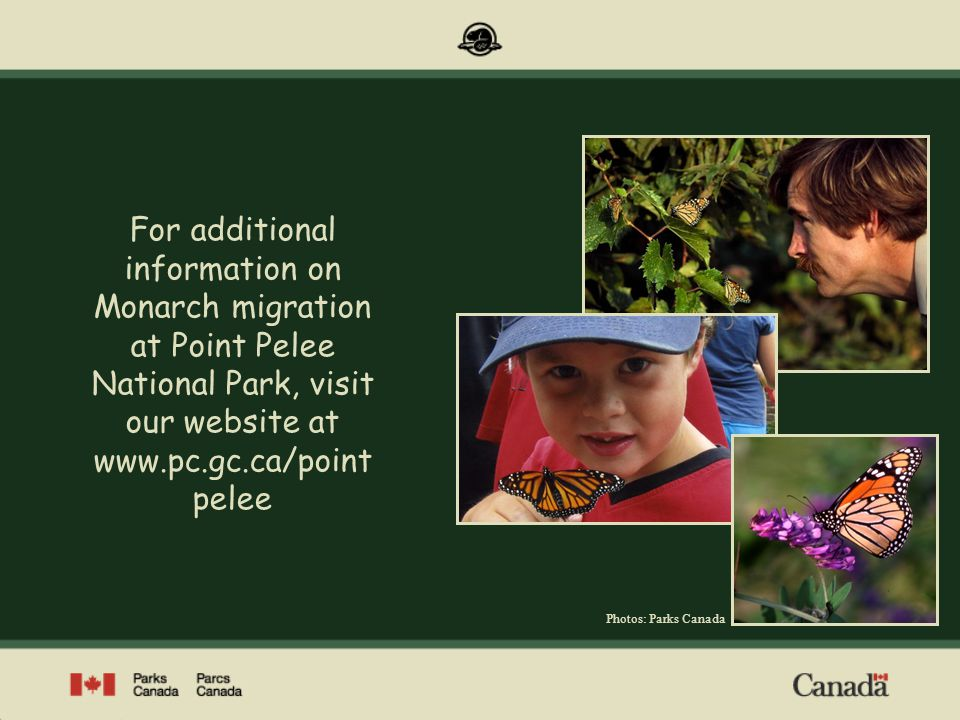 For additional information on Monarch migration at Point Pelee National Park, visit our website at www.pc.gc.ca/pointpelee