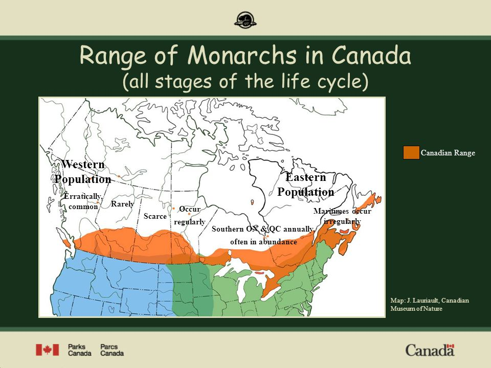 Range of Monarchs in Canada (all stages of the life cycle)