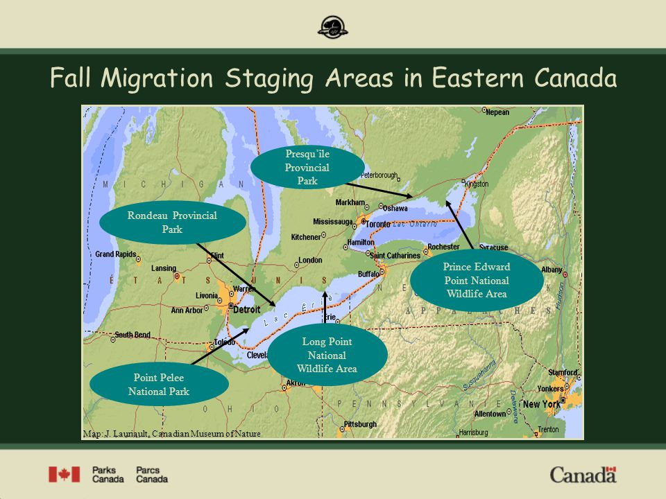 Fall Migration Staging Areas in Eastern Canada