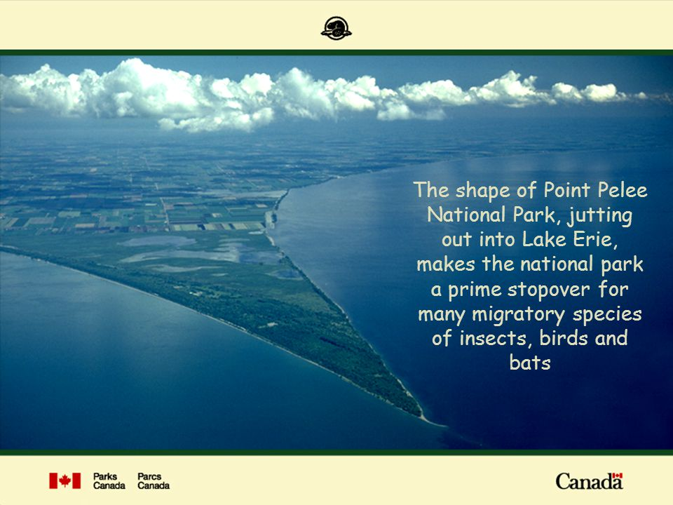 The shape of Point Pelee National Park, jutting out into Lake Erie, makes the national park a prime stopover for many migratory species of insects, birds and bats