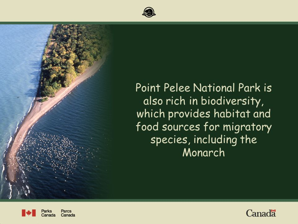 Point Pelee National Park is also rich in biodiversity, which provides habitat and food sources for migratory species, including the Monarch