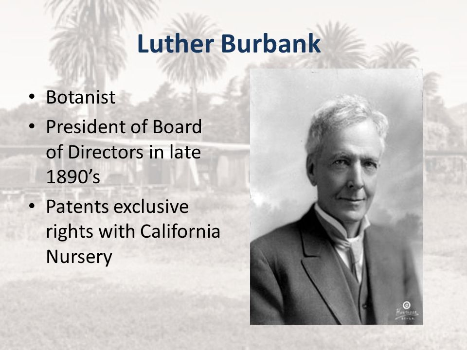 Luther Burbank Botanist President of Board of Directors in late 1890's