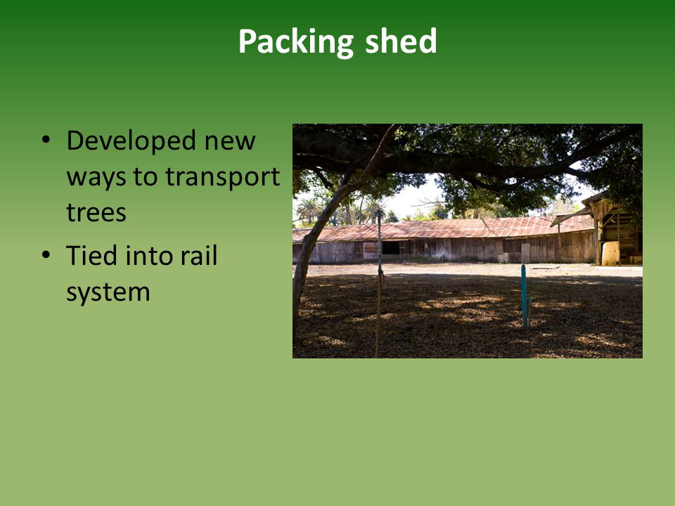 Packing shed Developed new ways to transport trees