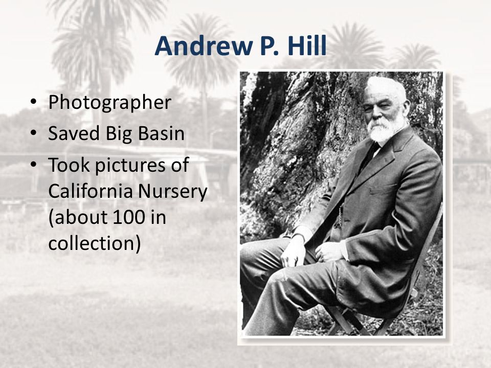 Andrew P. Hill Photographer Saved Big Basin
