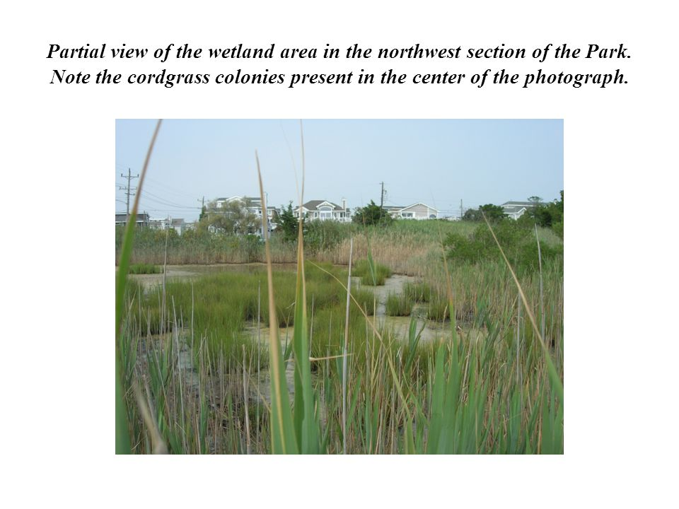 Partial view of the wetland area in the northwest section of the Park