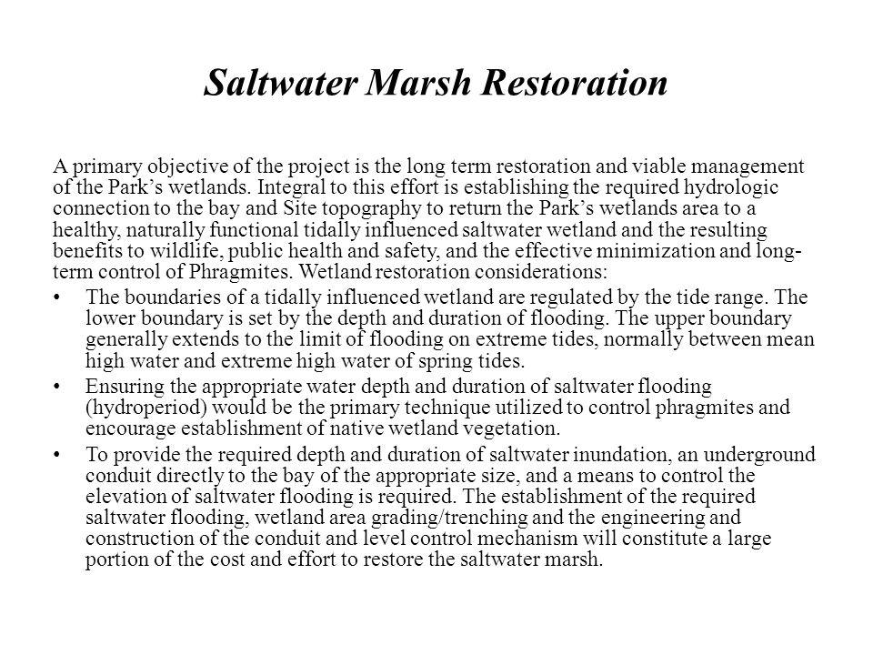 Saltwater Marsh Restoration