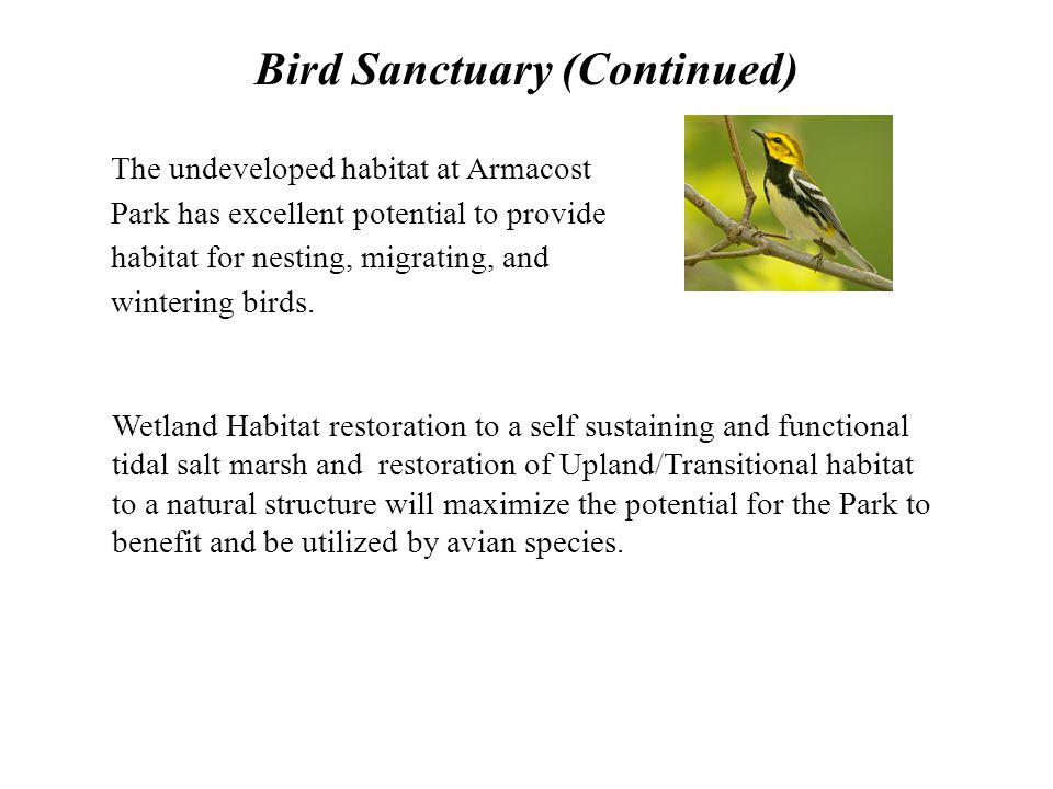 Bird Sanctuary (Continued)